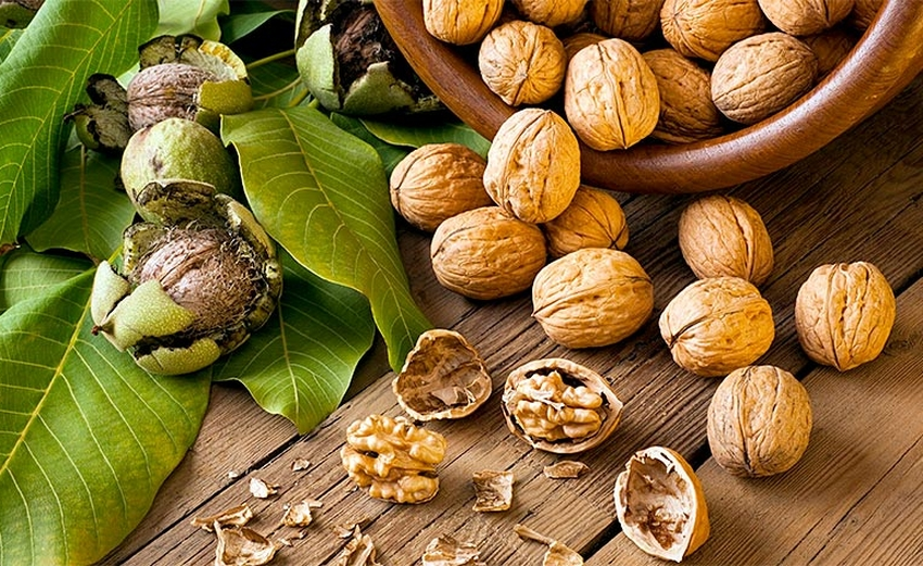 польза и вред грецких орехов для мужчин и женщин
