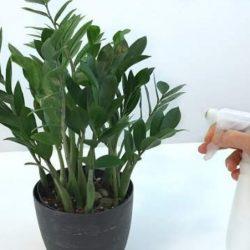 Почему в цветочных горшках завелись мошки и как их вывести