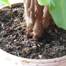 Как бороться с налётом на земле в цветочных горшках?