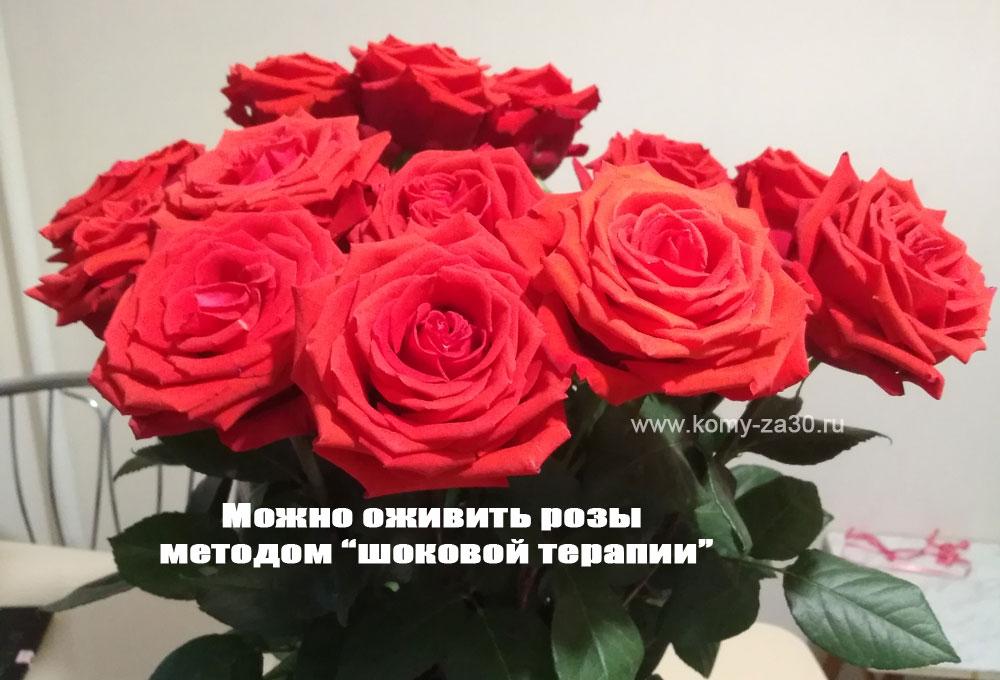 Можно оживить розы методом шоковой терапии