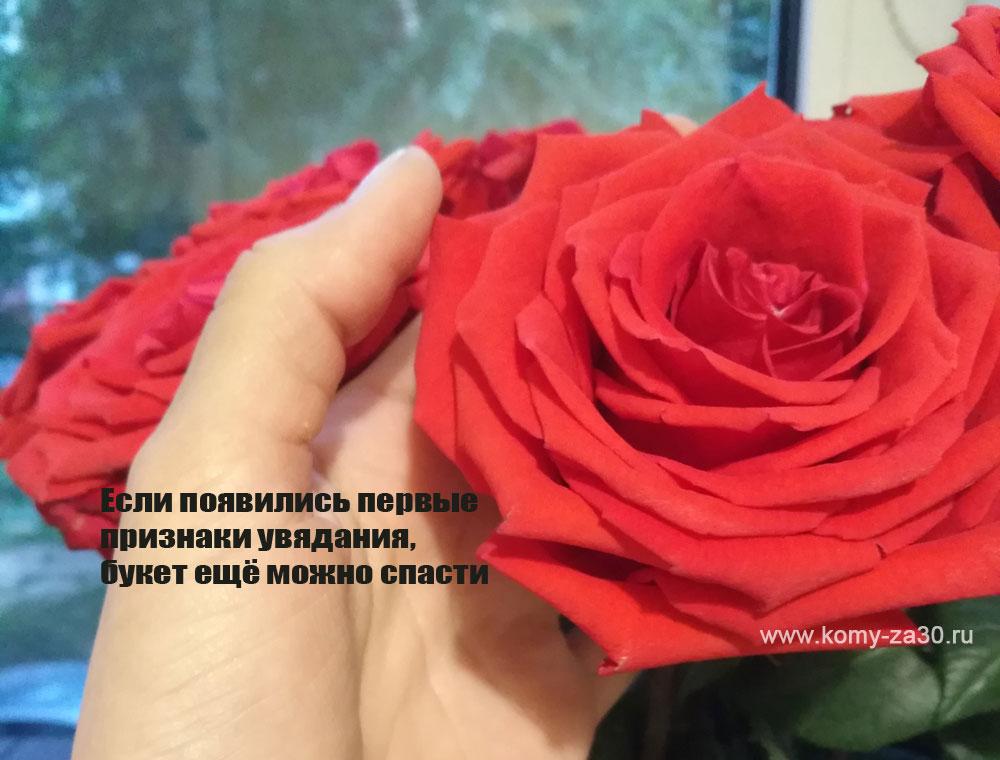 Не всегда розы получится реанимировать и вернуть к жизни