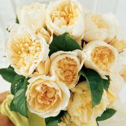 3 лучших способа вырастить розу из подаренного букета